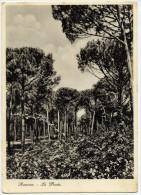 Ravenna. La Pineta. - Ravenna