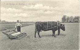 Culture De LIN - VLAS - Le Passage Du Rouleau  - Het Rollen - Tussen Kortrijk En Gent - Agriculture