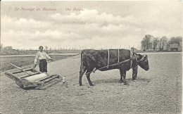 Culture De LIN - VLAS - Le Passage Du Rouleau  - Het Rollen - Tussen Kortrijk En Gent - Landbouw