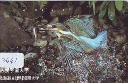Telecarte Japon OISEAU (3661) MARTIN PECHEUR * KINGFISHER  * Phonecard Japan * BIRD * TK EISVOGEL - Birds