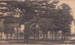 Saint-Gratien - écoles Et Cèdre Du Liban - 1938 - France