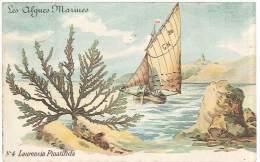 CPA - Les Algues Marines - Laurencia Pinatifida - Sin Clasificación