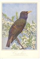 Chromo Menu Cacao Suchard, Grand Format Publicitaire, Oiseaux De Léo-paul Robert 1928 - Menus