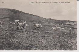 88=SAINT MAURICE....Le Sommet Du Ballon D'Alsace - Autres Communes