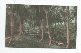 Cp , ANTILLES , JAMAIQUE , JAMAICA , The Perry River , Near Spanish Town , Voyagée 1916 , Ed : Duperley & Sons , 2 Scans - Jamaïque
