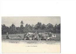 LVA1751 - A La Charrue  Boeufs - Attelages