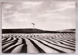 CPSM - Le Sahara (Algérie) - 25, Neige Ou Sable? - Algeria