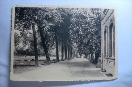 Brugelette - Institut De L'enfant Jésus - Brugelette - Allée Des Marronniers - Brugelette