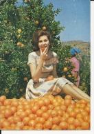 Carte Postale  Afrique Du Sud : Johannesburg  : La Récolte Des Oranges - South Africa