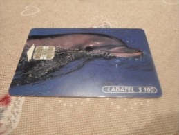 MEXICO - nice thematic phonecard dolphin