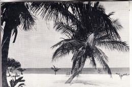 COTE D´IVOIRE / ELFENBEINKÜSTE, Strand, 1967 - Elfenbeinküste