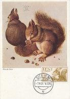 D18409 CARTE MAXIMUM CARD 1956 IFNI - SQUIRREL ECUREUIL CP ORIGINAL - Roditori