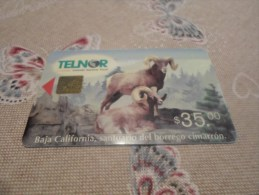 MEXICO - old phonecard as on photo n�13