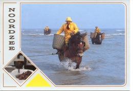 Belgique - Noordzee - Mer Du Nord (pêcheurs De Crevettes à Cheval ) Métiers - éd Van Mieghem - Pêche