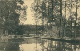 BELGIQUE AUDERGHEM / Vue Des Etangs Dans La Forêt / - Oudergem - Auderghem