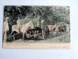 Carte Postale Ancienne : HONDURAS : Finca De Bananos - Honduras