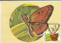 4497- LARGE COPPER, BUTTERFLY, CARTES MAXIMUM, 1992, ROMANIA - Butterflies