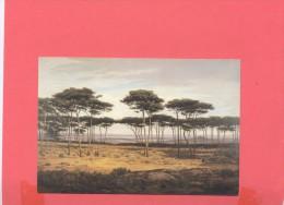 ART :  Alexandre SEGE, Les Pins De Plédéliac , Musée De RENNES - Peintures & Tableaux