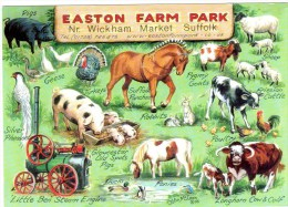 Postcard - Easton Farm Park, Suffolk. A