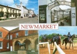 Postcard - Newmarket (Horses/Museum/Statue), Suffolk. 2-31-15-01