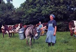 LA TRAITE DES VACHES EN NORMANDIE - Farmers