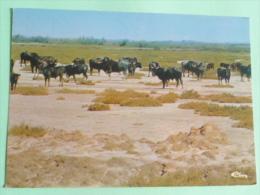 Toros En CAMARGUE - Unclassified