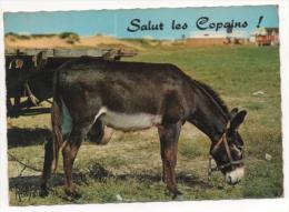 "FRANCE - Âne.  ""Salut Les Copains""  ! - Donkeys"