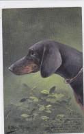 CARD   CANE BASSOTTO - BASSET SAUS-SAGE DOG FIRMA MULLER .....1903     FP-V-2 -0882 21885 - Chiens
