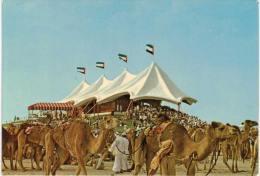 Asie - Dubai Camel Race - Dubai