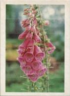 Image Photo De Fleur : La Digitale - Chromos