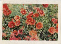 Image Photo De Fleur : Le Coquelicot - Chromos