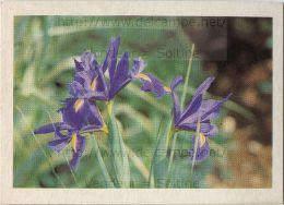 Image Photo De Fleur : L´iris - Autres