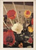 Image Photo De Fleur : La Tulipe - Trade Cards