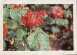 Image Photo De Fleur : La Rose - Chromos