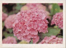 Image Photo De Fleur : L´hortensia - Chromos