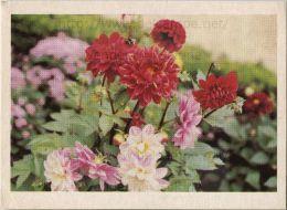 Image Photo De Fleur : Le Dahlia - Chromos