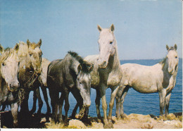CPSM CHEVAL CHEVAUX CAMARGUE MANADE CIM 1987 - Pferde
