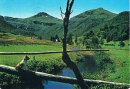 NOTRE BELLE AUVERGNE - Paysage De Montagne Avec Rivière, Petit Chien En 1er Plan - Circulé 1983 - Auvergne