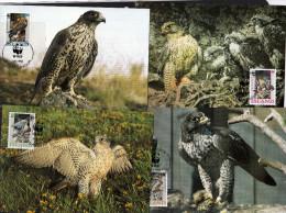 Islande: 1992 4 Très Belles Carte Maximum WWF Rapaces Le Gerfaut - Eagles & Birds Of Prey