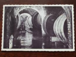 Caves Coopératives Des Vignerons De WELLENSTEIN S/Moselle - Anno 19?? ( Zie Foto Details ) !! - Vignes