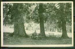 Hinterzarten - Sous Bois, Repos - Série Schwarzwald - Hinterzarten