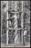 COLLECTING RUBBER FROM THE RUBBER TREES - RECOLTE DU CAOUTCHOUC - Non Classés