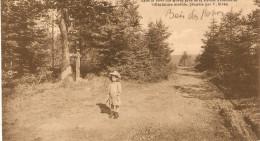 5866 CHEVRON LA CROIX NIVERT - Stoumont