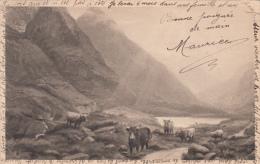 Original 1906 Card - Might Be Scottish Highland Cattle - Written - Cows Livestock  - Stamp & Postmark - Postcards