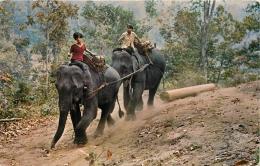 THAILANDE TWO ELEPHANTS PULLING - Thaïlande