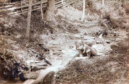 Mädchen Mit Zopffrisur Liegt Träumend An Flussufer Fotokarte 1908, 3 Sonderstempel Ludwighaus, Schneealpe, Habsburghaus - Frauen
