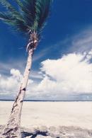 Micronesia Pohnpei Beautiful Beach Scene With Palm - Micronesia