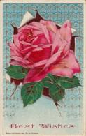Best Wishes - Pink Rose - Fleurs, Plantes & Arbres