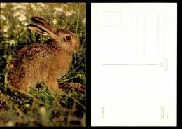 741-animaux-3576     Lapin - Cartoline