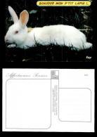 741-animaux-3595     Lapin Blanc - Ansichtskarten